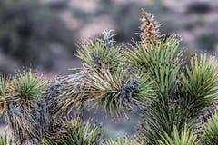 Agujas de la vegetación Fotos de archivo libres de regalías