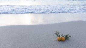 Agujas y mandarinas por el mar Fotos de archivo libres de regalías