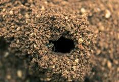 Agujero de la hormiga Foto de archivo