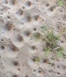 agujero de la larva del león de hormiga Fotografía de archivo libre de regalías