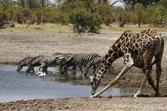 Agujero de riego africano Imagen de archivo