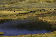 Agujero de riego del búfalo Imagen de archivo libre de regalías