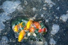 Agujero del hielo con los pescados Imagen de archivo libre de regalías