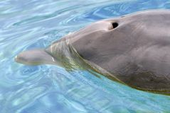Agujero del soplo del delfín fotografía de archivo