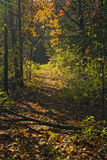 Agujero en el bosque Imagen de archivo