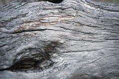 Agujero en superficie del tronco de árbol imágenes de archivo libres de regalías