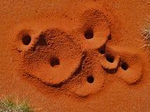 Agujeros de la hormiga de Spinifex fotos de archivo libres de regalías