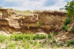 agujeros de los Abeja-comedores en colina de la arena Foto de archivo