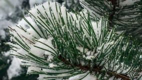 Agulhas cobertos de neve imagens de stock royalty free
