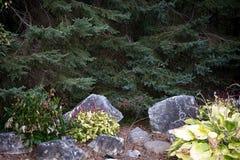 Agulhas dos pinhos no jardim de pedra Fotos de Stock