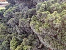 Agulhas verdes bonitas na árvore do arbusto do por do sol Fotografia de Stock