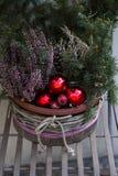 Agulhas verdes do abeto no vaso de flores decorado com as bolas vermelhas do Natal Foto de Stock