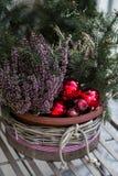 Agulhas verdes do abeto no vaso de flores decorado com as bolas vermelhas do Natal Imagens de Stock
