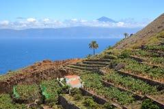 AGULO, los angeles GOMERA, HISZPANIA: Kultywuję tarasował pola blisko Agulo wioski z Atlantyckim oceanu i Teide wulkanem w Teneri Obraz Royalty Free