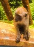 agung dziecka Bali dalem lasowego Indonesia małpiego padangtegal pura święty świątynny ubud Fotografia Royalty Free