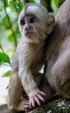 agung dziecka Bali dalem lasowego Indonesia małpiego padangtegal pura święty świątynny ubud Zdjęcie Royalty Free