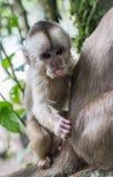 agung dziecka Bali dalem lasowego Indonesia małpiego padangtegal pura święty świątynny ubud Zdjęcia Royalty Free