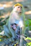 agung dziecka Bali dalem lasowego Indonesia małpiego padangtegal pura święty świątynny ubud Obrazy Stock