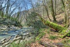 Agura rzeka Zdjęcie Stock