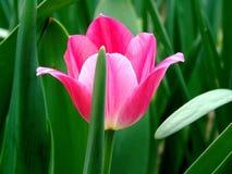 Ah, ce printemps - tendresse et beauté image stock