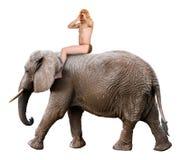Yell Tarzan, король джунглей, изолированного слона езды человека, Стоковая Фотография
