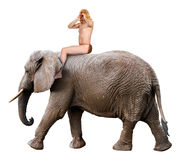 Tarzan Yell, King of Jungle, Man Ride Elephant, Isolated Stock Photography