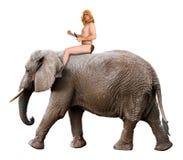 Roi de Tarzan de jungle, éléphant de tour d'homme, d'isolement photo stock