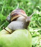 ahaatin auf einem Apfel Lizenzfreie Stockbilder
