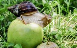 ahaatin auf einem Apfel Stockbild