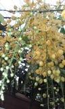 Ahela-Blumen lizenzfreie stockfotografie
