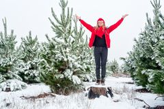 Standiing among the snow covered pine tree forests stock image