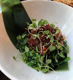 Ahi tuńczyk z Microgreens Zdjęcie Royalty Free