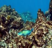 ahihi som snorkeling Fotografering för Bildbyråer