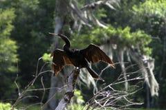 Ahinga em Wakulla salta parque estadual, Florida Fotos de Stock