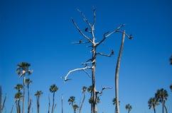 Ahninga träd Arkivbilder