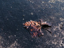 Ahogamiento en petróleo Imagen de archivo