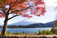 Ahorn-Korridor nahe Kawaguchi See, Japan während des Herbstes Stockfotos