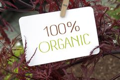 Ahorn mit Kartenbrett und 100% organisch stockbilder