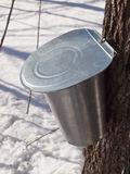 Ahorn-Saft, der in Quebec, Kanada erntet Stockfotografie