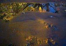 Ahornbaum im Herbst reflektiert in der Pfütze Lizenzfreie Stockfotos