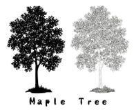 Ahornbaum-Schattenbild, Konturen und Aufschriften Lizenzfreie Stockfotografie
