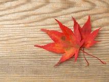 Ahornblätter auf einem Brett stockfoto