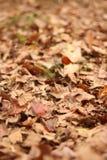 Ahornblätter auf Hintergrund Stockbild