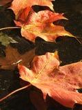 Ahornblätter auf Wasser Lizenzfreie Stockfotografie