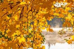 Ahornblätter in Autumn Color Stockbilder