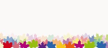 Ahornblätter in den verschiedenen Farben Stockfoto