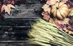 Ahornblätter, ein Kürbis und Weizen-Hintergrund Lizenzfreies Stockfoto