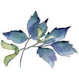 Ahornblätter in einer Aquarellart lokalisiert Stockbilder