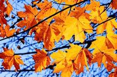 Ahornblätter im Herbst landschaft Ölfarbe auf Papier Naive Kunst Abstrakte Kunst Malende Ölfarbe stock abbildung