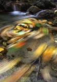 Ahornblätter im Strom stockbild